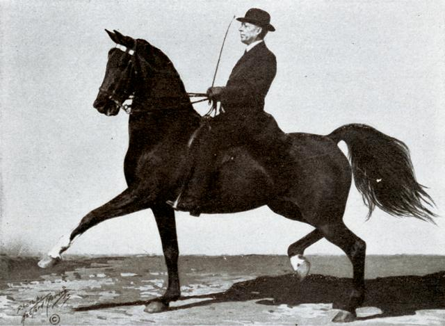 Tom Bass and his horse, Belle Beach .